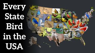 Every State Bird in the USA