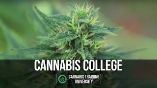 Marijuana School. Cannabis College. Cannabis Training. How To Grow Marijuana