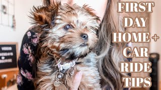 WHAT TO DO THE FIRST DAY WITH A NEW PUPPY & CAR RIDE TIPS | DOG VLOG
