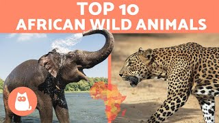 Animals of Africa - 10 WILD ANIMALS from the African savanna
