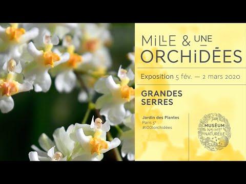 Mille & une Orchidées 2020 au Muséum national d'Histoire naturelle