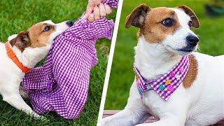 13 лайфхаков для собак и их владельцев!