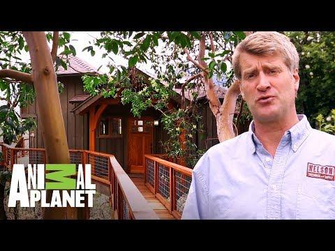 Una casa de árbol con puente en la colina | Mansiones en los árboles | Animal Planet