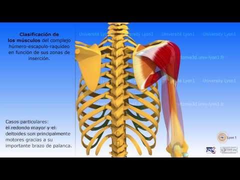 Hombro ICD osteocondrosis articulación 10