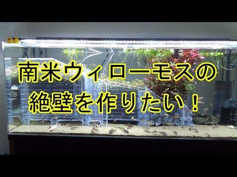 #043:南米ウィローモスの絶壁を作りたい【Aquarium】120cm コリドラス水槽