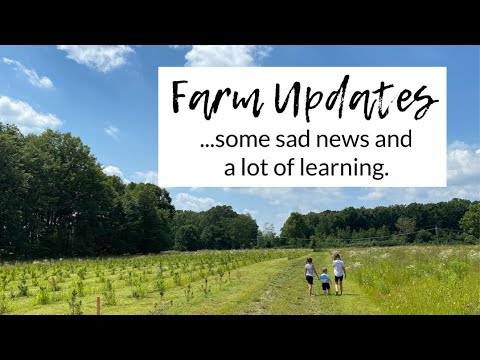 , title : 'STARTING A CHRISTMAS TREE FARM | our first summer...the good and the bad