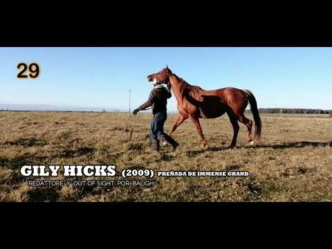 Lote GILY HICKS (BRZ)