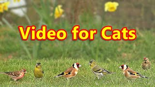 Videos for Cats : Birds Galore - 8 HOURS