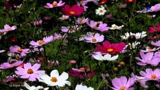 Michel Pépé - Le Grand Voyage - Relaxing Music