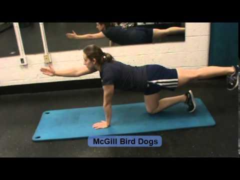 McGill Bird Dogs