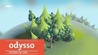 Warum wir den Wald überfordern?