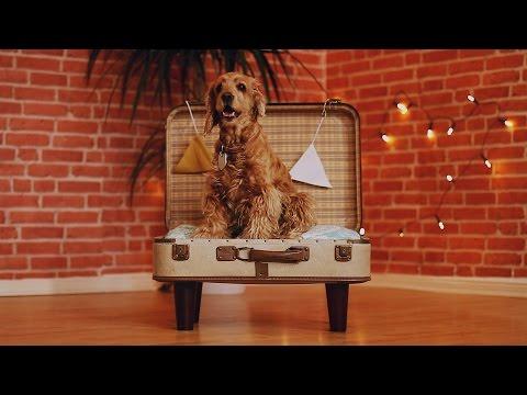 So bekommst du den Hund ganz leicht in den Koffer.