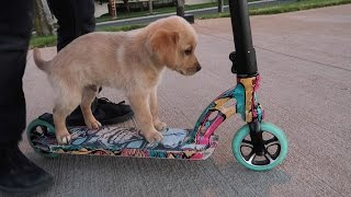 PUPPY RIDING A SCOOTER