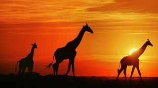 Mp3 African Safari Music Download