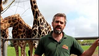How are the Rothschild Giraffe cared for at Fota Wildlife Park