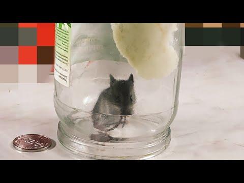 Как поймать мышь. Самый лучший способ