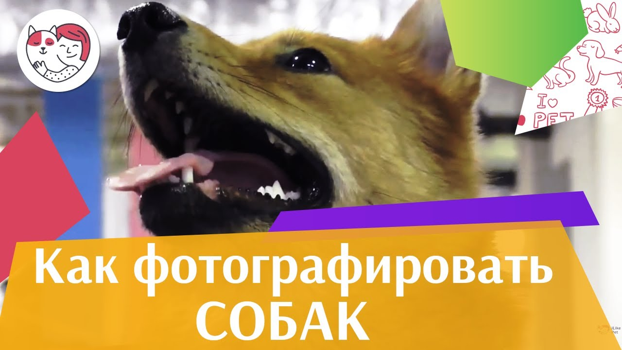 4 совета, как сделать фотографию с собакой идеальной на ilikpet