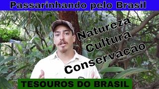 Ajudar aves ameaçadas? Entenda o projeto TESOUROS DO BRASIL
