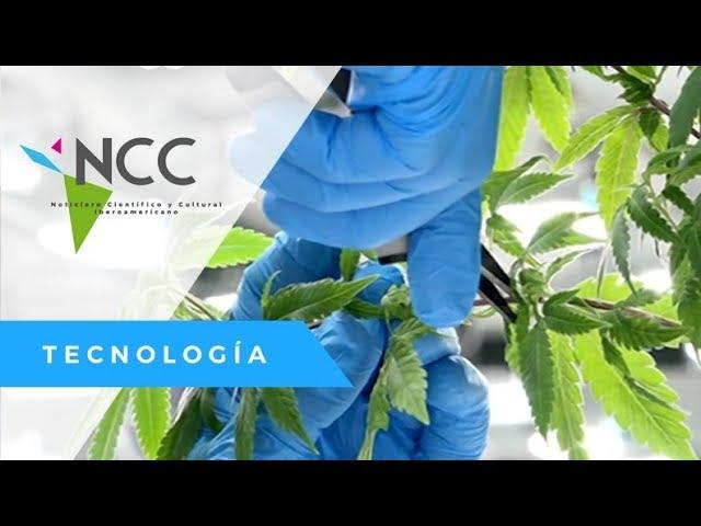 Hacia una industria del cannabis