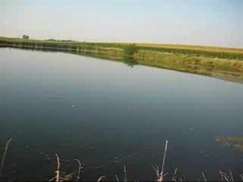 Farm Pond Fishing 8/19/08