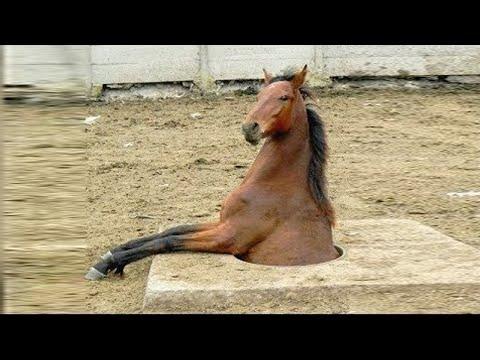 キュートで面白い馬の瞬間  Фото 2