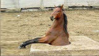 キュートで面白い馬の瞬間  Фото 1