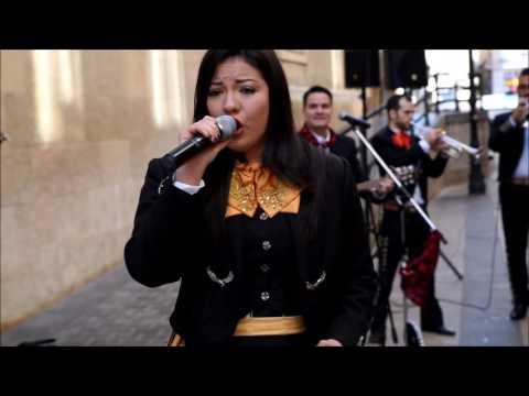 Video 6 de Mariachi El Rey