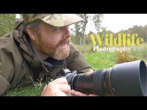 Testing the Nikon Z6 & Nikon 300mm f/4 PF | WILDLIFE PHOTOGRAPHY