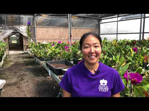 , title : 'AOG Cattleya Care Video