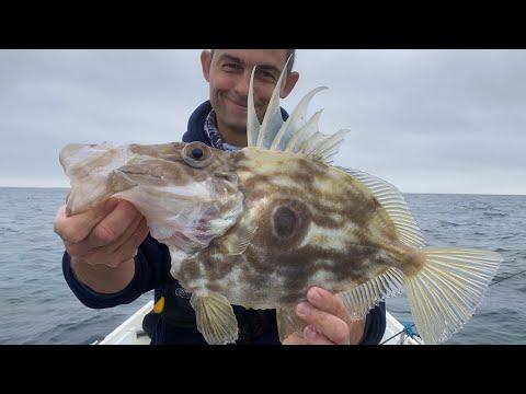 Sanktpetersfisk i England