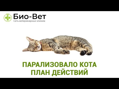 Парализовало кота  План действий. Ветеринарная клиника Био-Вет.