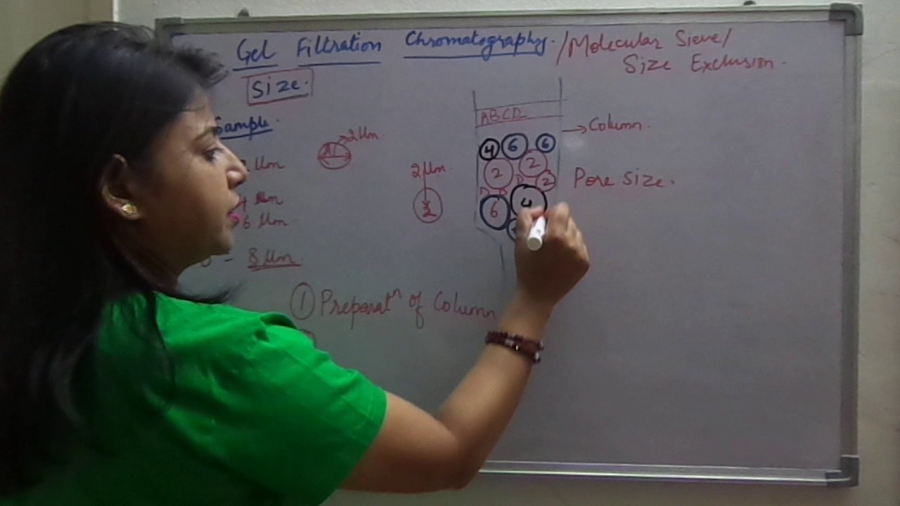 The Concept Of Gel Filtration Chromatography