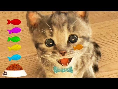 Download Play Fun Pet Care Kids Game -Little Kitten My Favorite Cat - Fun Cute Kitten For Children & Toddlers HD Mp4 3GP Video and MP3