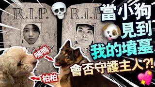 【測試】當小狗見到我的墳墓!會否守護主人?