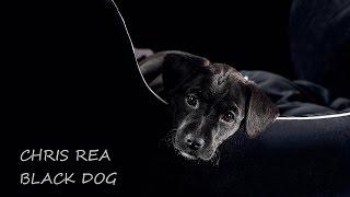 CHRIS REA - BLACK DOG