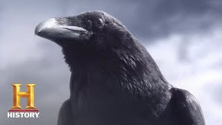 Crow Teaser
