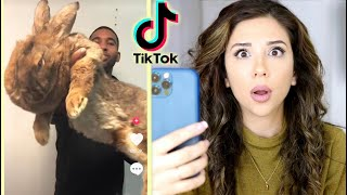 The Bunny Side of Tik Tok by Lennon The Bunny