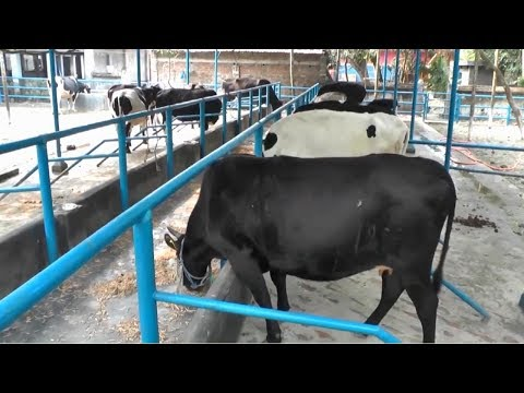 , title : 'Starting a Business - How to Start a Business Dairy Farm and Dairy Cow Farm Management