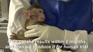Thailand is conducting tests on macaque monkeys as it races to