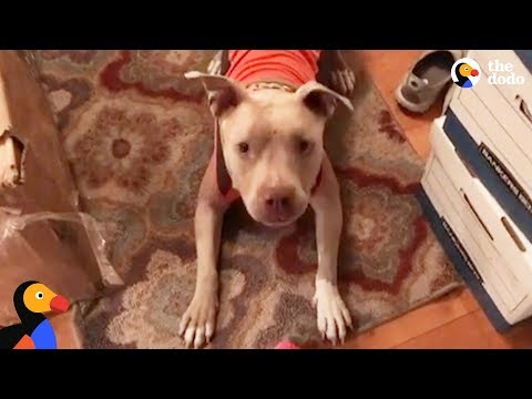 Rescue Pit Bull Dog Helps Mom Find Love and Laughter Again | The Dodo