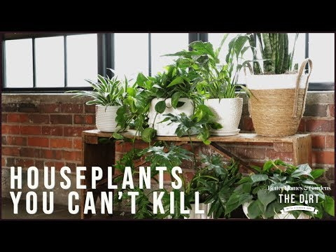 Houseplants You Can't Kill | The Dirt | Better Homes & Gardens