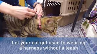How to Leash Train Your Cat in 5 Steps