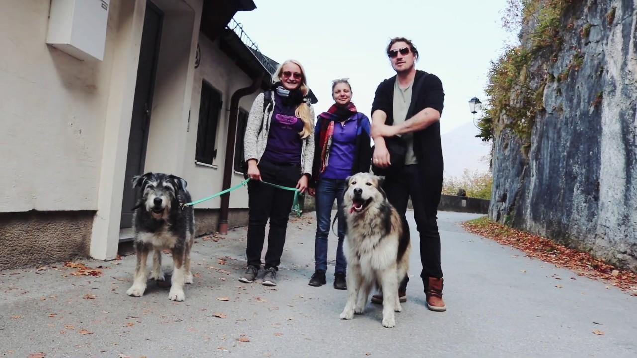 Österreich, Hundekoch Profi im Land der Knödel :) Hunde on Tour :)