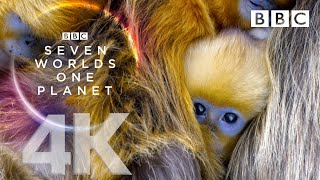 Seven Worlds, One Planet: Extended Trailer (ft Sia and Hans Zimmer) - BBC Earth