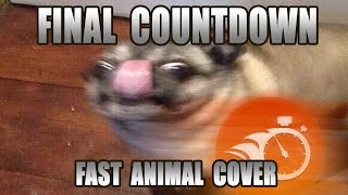 Europe   Final Countdown (Fast Animal Cover) [done Within An Hour]