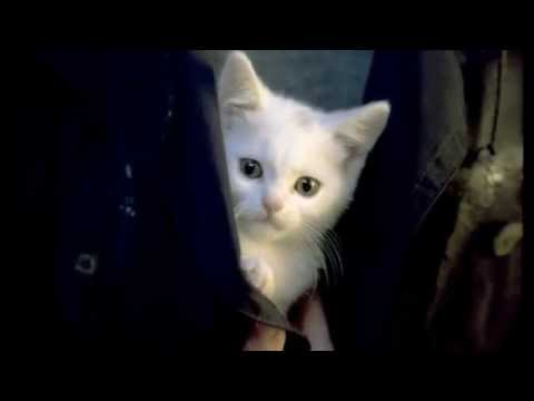"""Cute kitten finds new home - """"Welcome Home"""" by Catsan"""