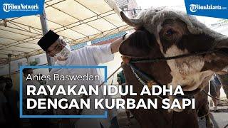 Rayakan Idul Adha, Anies Kurban Sapi Limosin Seberat 1,3 Ton di Masjid Balai Kota