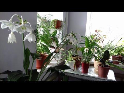 Обзор комнатных цветов. Как наши растения пережили зиму.