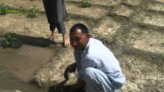 preview picture of video 'How to Grow Water Melons in Pakistan'