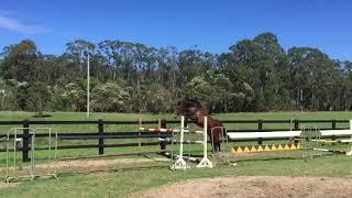 Tulara Casciado. Cascadello I/Diarado. A beautiful young colt rising 4 years old now in partnership with Jamie Kermond and Jamie Winning.